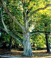 Img_arbres